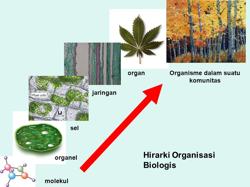Organisme dalam suatu komunitas