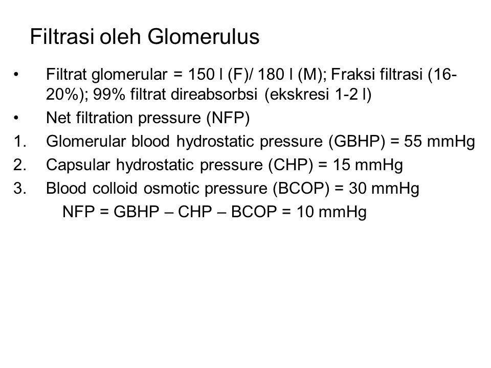 Filtrasi oleh Glomerulus