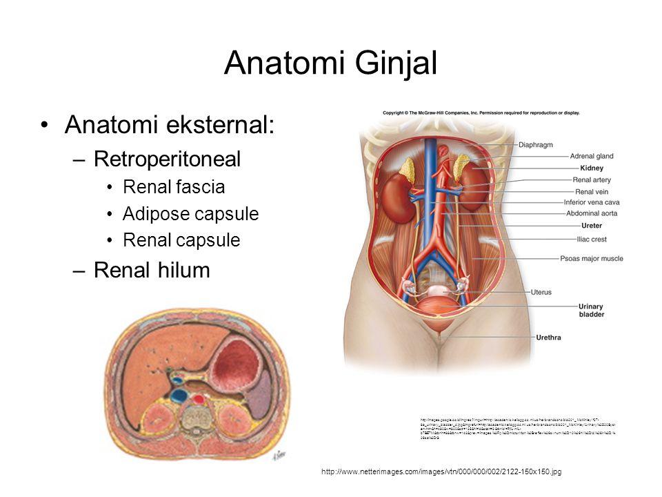 Anatomi Ginjal Anatomi eksternal: Retroperitoneal Renal hilum