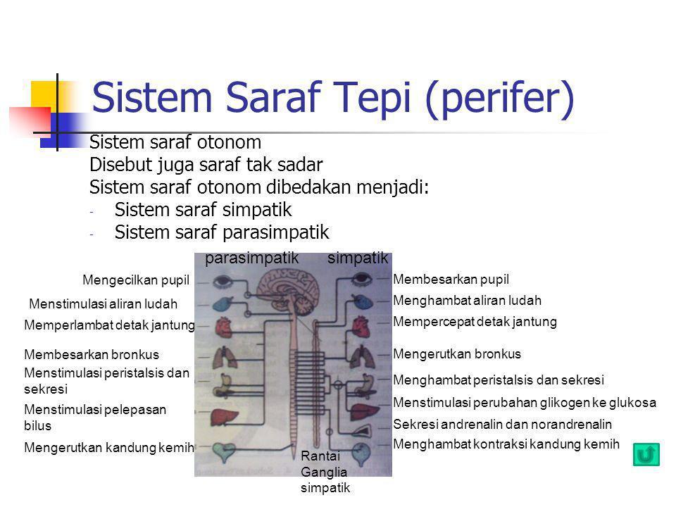 Sistem Saraf Tepi (perifer)