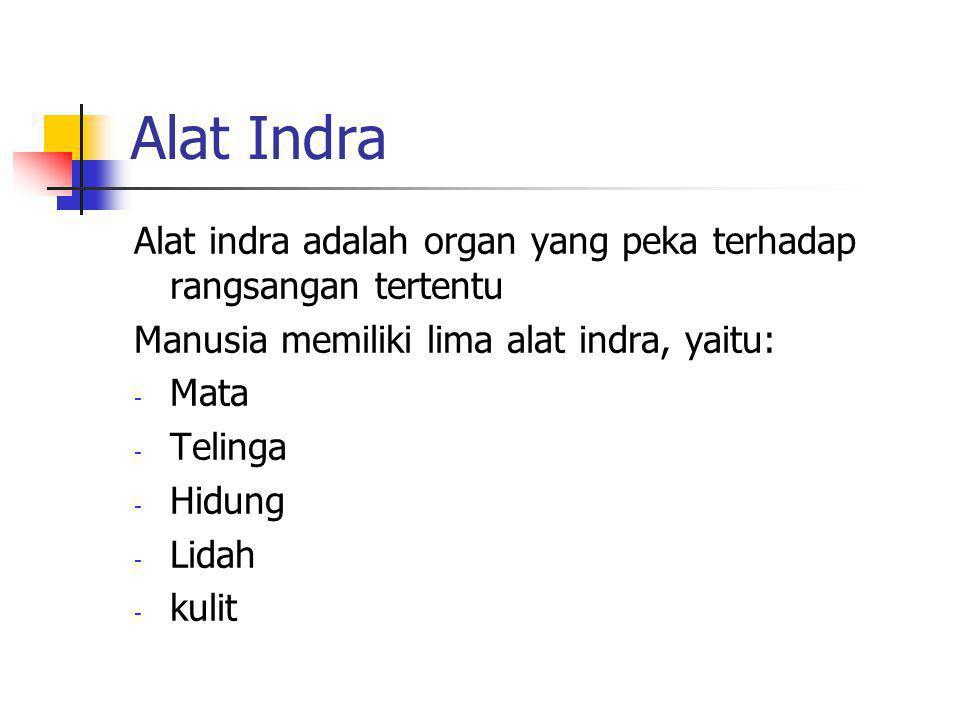 Alat Indra Alat indra adalah organ yang peka terhadap rangsangan tertentu. Manusia memiliki lima alat indra, yaitu: