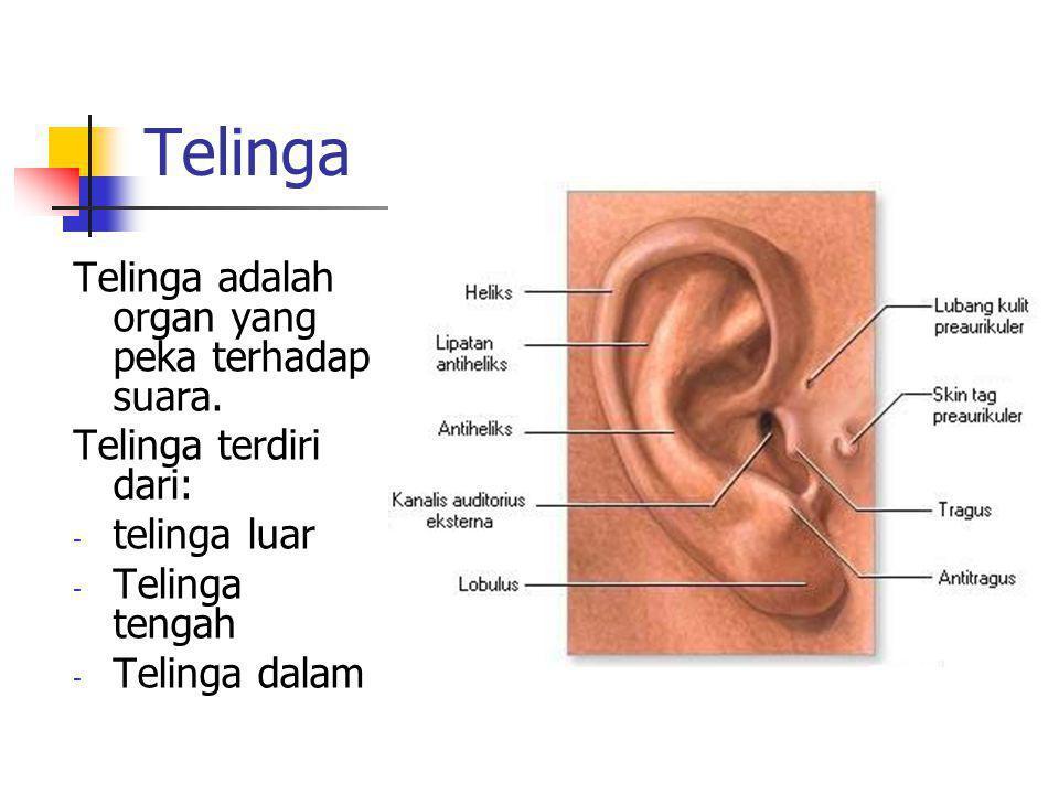 Telinga Telinga adalah organ yang peka terhadap suara.