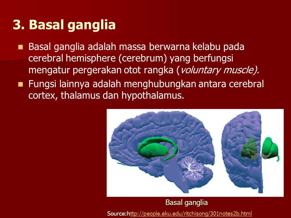 3. Basal ganglia