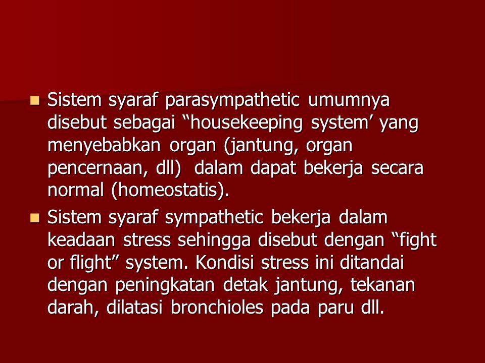 Sistem syaraf parasympathetic umumnya disebut sebagai housekeeping system' yang menyebabkan organ (jantung, organ pencernaan, dll) dalam dapat bekerja secara normal (homeostatis).