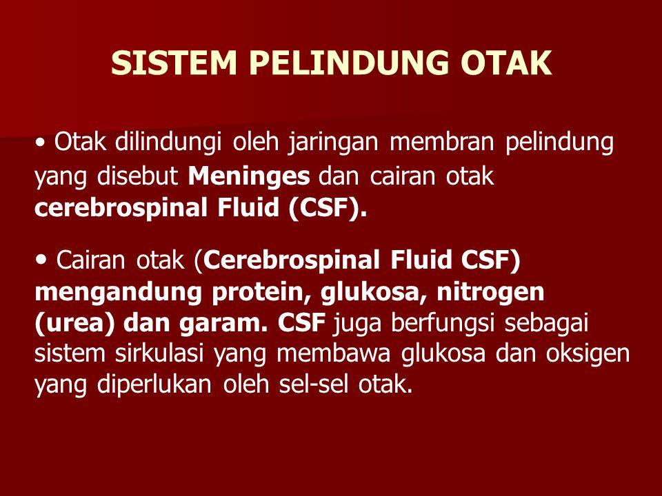 SISTEM PELINDUNG OTAK Otak dilindungi oleh jaringan membran pelindung yang disebut Meninges dan cairan otak cerebrospinal Fluid (CSF).