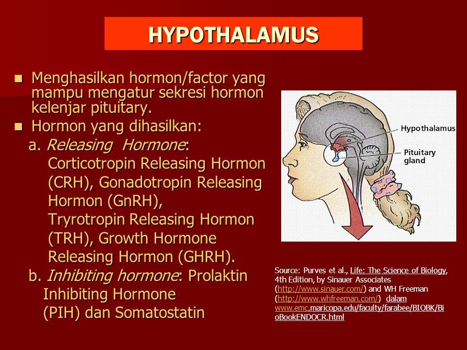 HYPOTHALAMUS Menghasilkan hormon/factor yang mampu mengatur sekresi hormon kelenjar pituitary. Hormon yang dihasilkan: