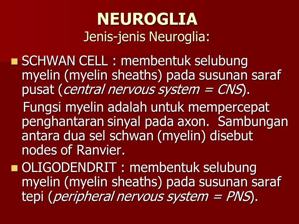 NEUROGLIA Jenis-jenis Neuroglia: