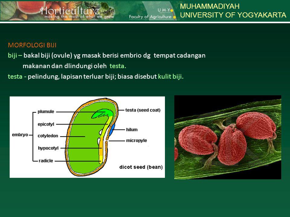 MUHAMMADIYAH UNIVERSITY OF YOGYAKARTA. MORFOLOGI BIJI biji – bakal biji (ovule) yg masak berisi embrio dg tempat cadangan.