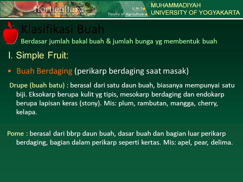 MUHAMMADIYAH UNIVERSITY OF YOGYAKARTA. Klasifikasi Buah Berdasar jumlah bakal buah & jumlah bunga yg membentuk buah.