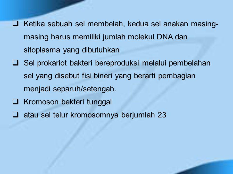 Ketika sebuah sel membelah, kedua sel anakan masing-masing harus memiliki jumlah molekul DNA dan sitoplasma yang dibutuhkan