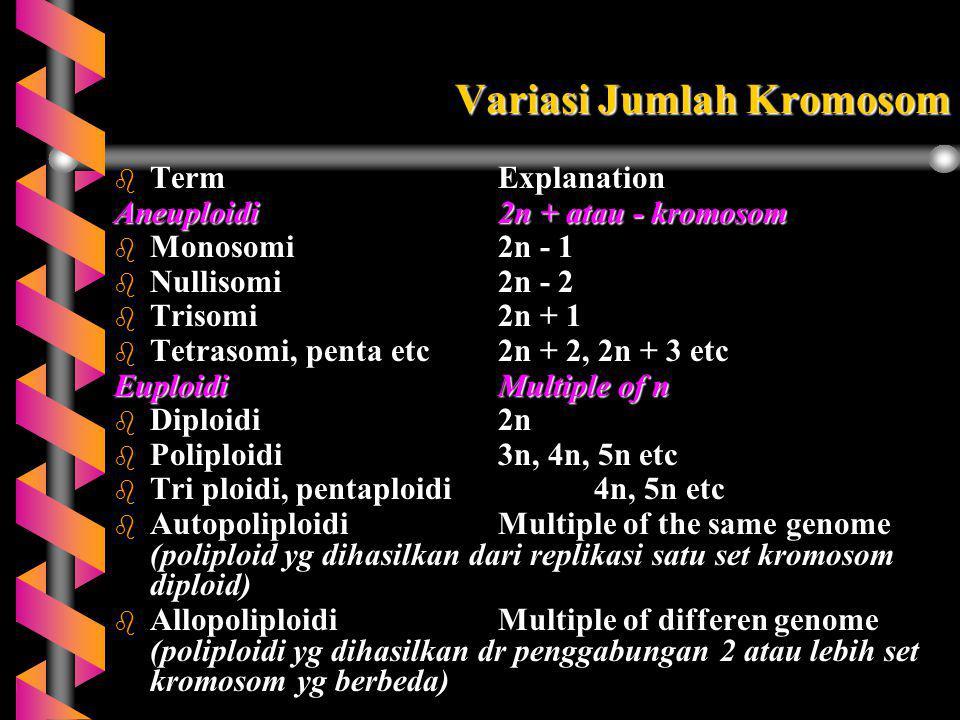 Variasi Jumlah Kromosom