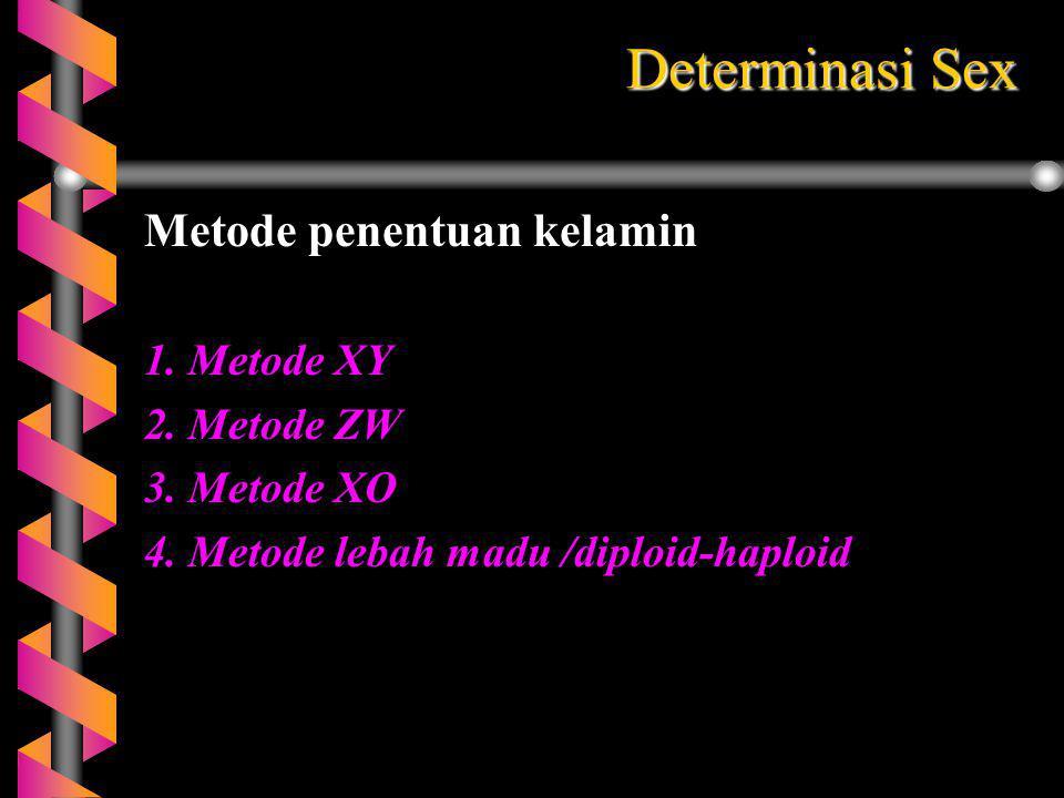 Determinasi Sex Metode penentuan kelamin 1. Metode XY 2. Metode ZW