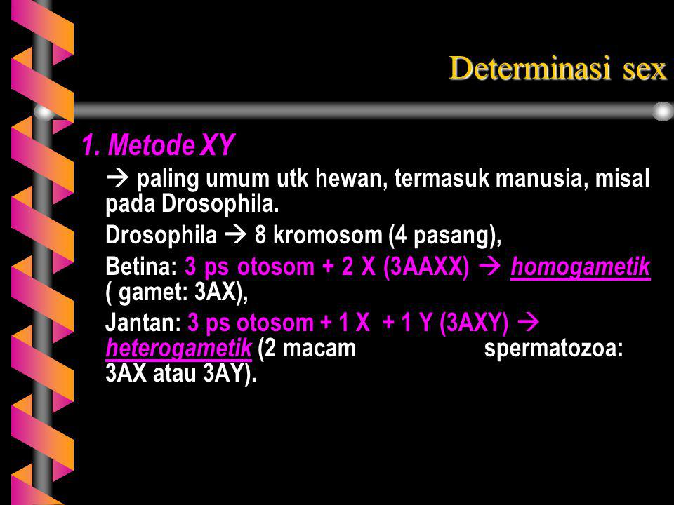Determinasi sex 1. Metode XY
