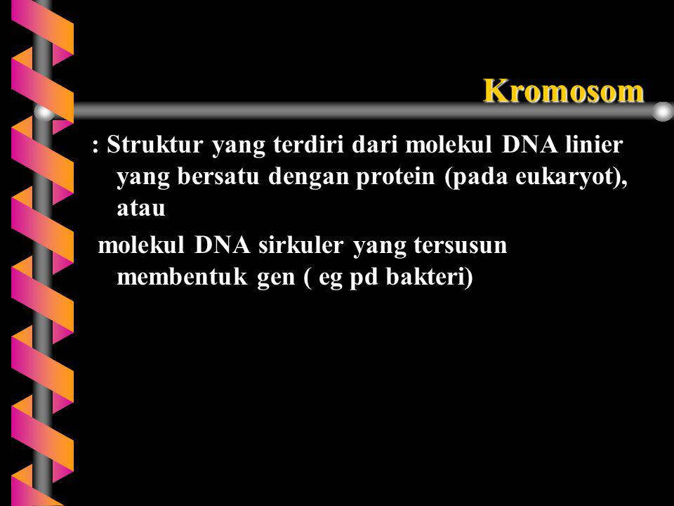 Kromosom : Struktur yang terdiri dari molekul DNA linier yang bersatu dengan protein (pada eukaryot), atau.