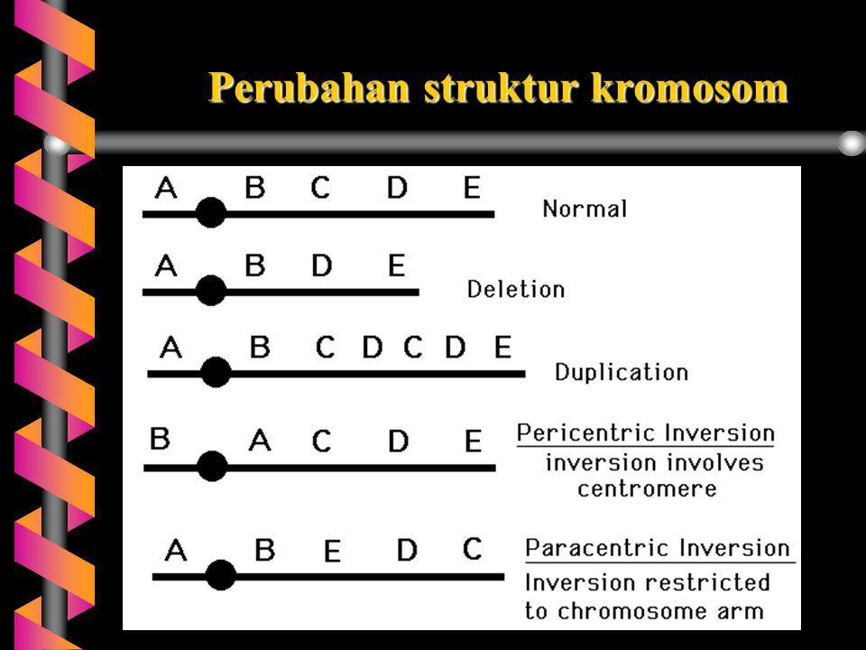 Perubahan struktur kromosom