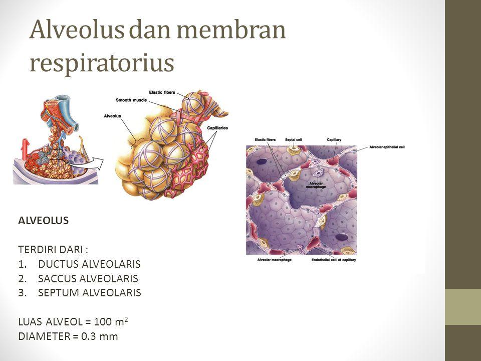 Alveolus dan membran respiratorius
