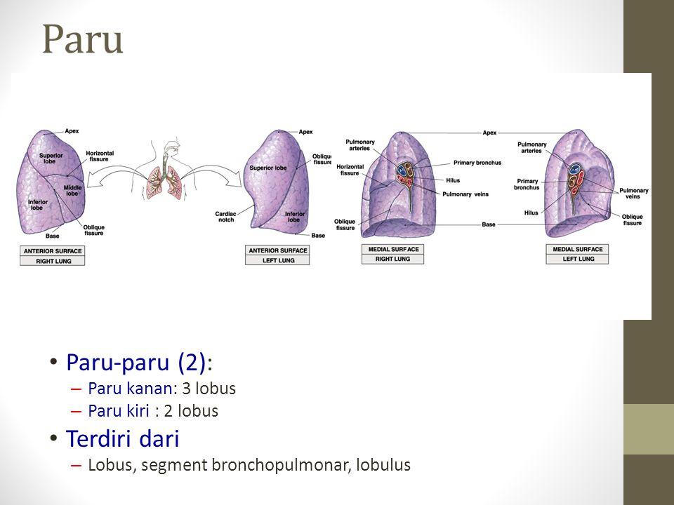 Paru Paru-paru (2): Terdiri dari Paru kanan: 3 lobus