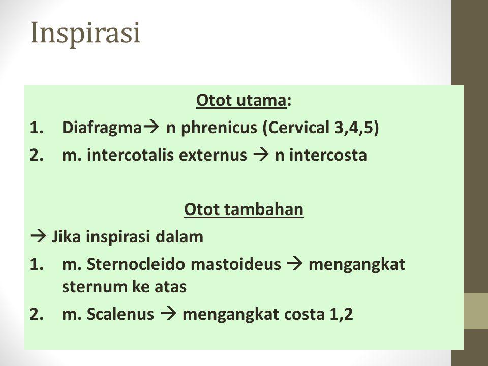 Inspirasi Otot utama: Diafragma n phrenicus (Cervical 3,4,5)