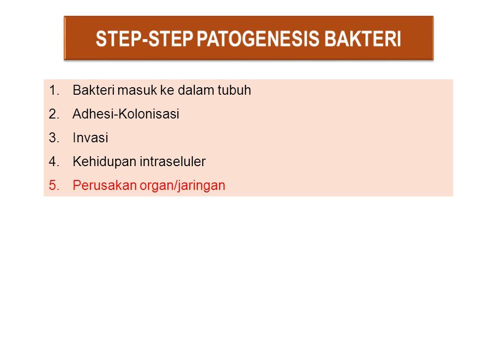 STEP-STEP PATOGENESIS BAKTERI