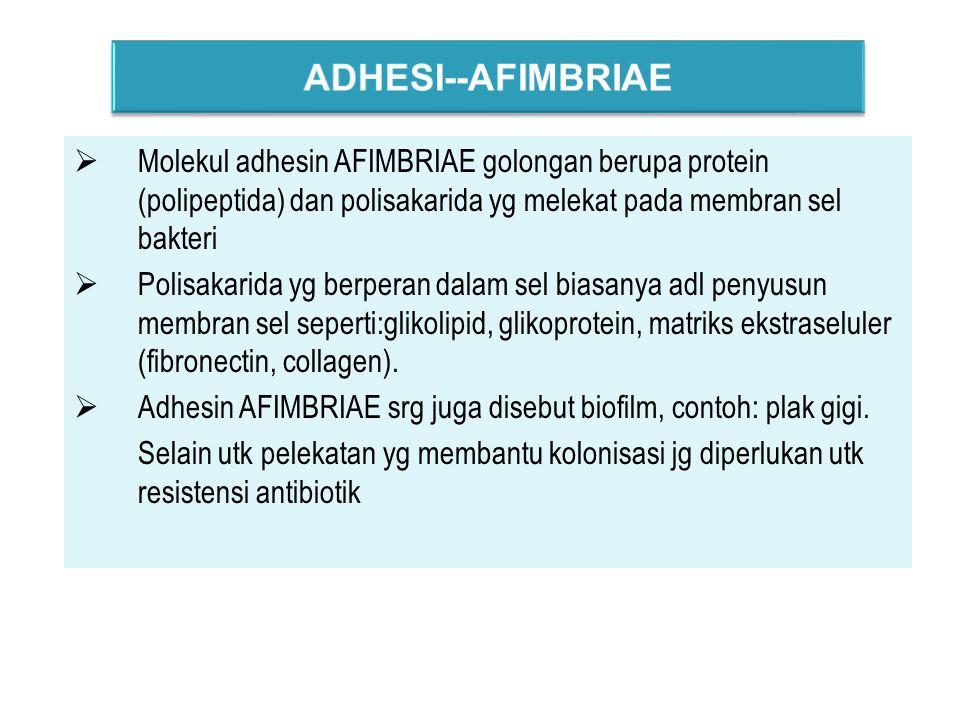 ADHESI--AFIMBRIAE Molekul adhesin AFIMBRIAE golongan berupa protein (polipeptida) dan polisakarida yg melekat pada membran sel bakteri.
