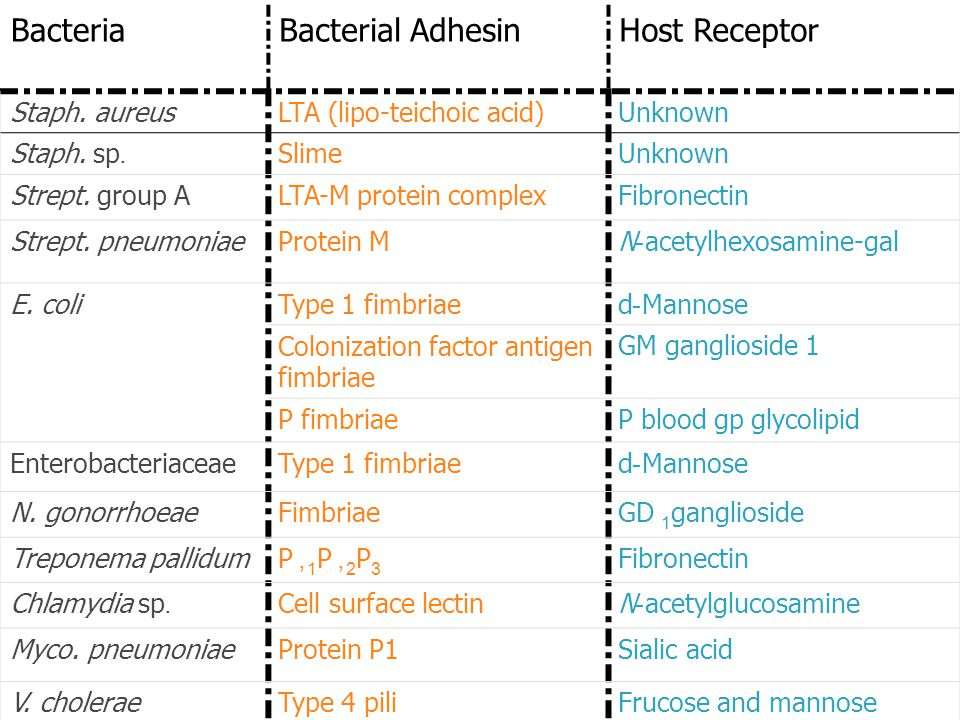 Examples of Bacterial Adherence Mechanisms