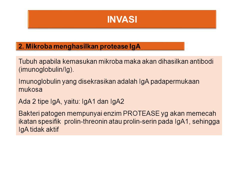 INVASI 2. Mikroba menghasilkan protease IgA