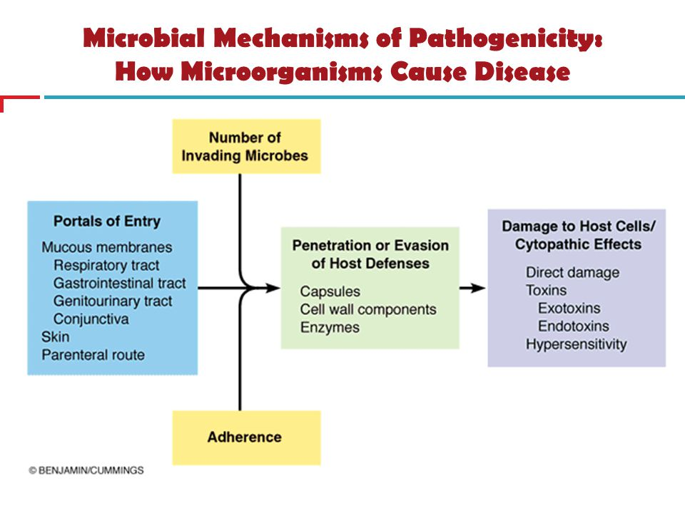 Microbial Mechanisms of Pathogenicity: How Microorganisms Cause Disease
