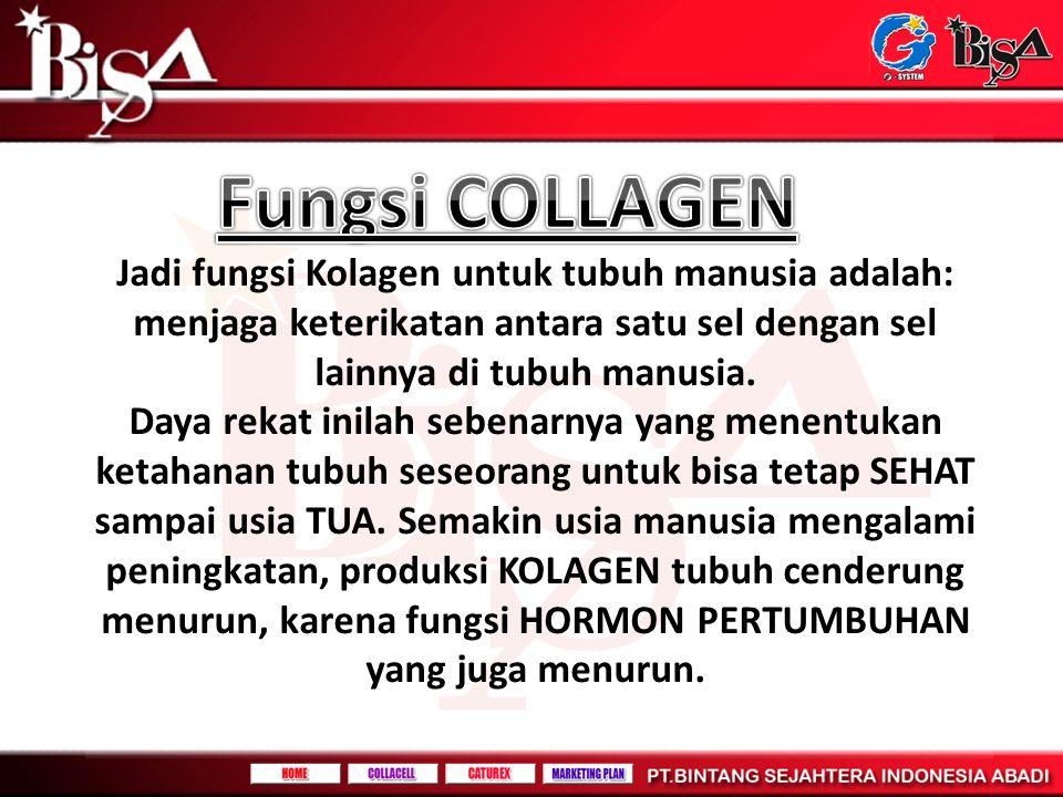 Fungsi COLLAGEN Jadi fungsi Kolagen untuk tubuh manusia adalah: menjaga keterikatan antara satu sel dengan sel lainnya di tubuh manusia.