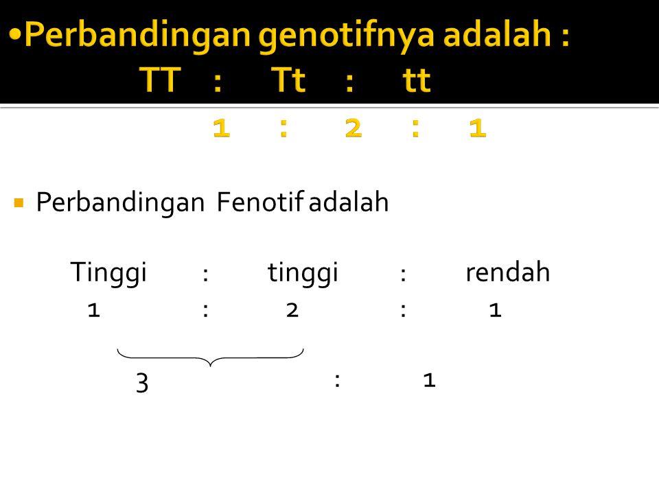 Perbandingan genotifnya adalah : TT : Tt : tt 1 : 2 : 1