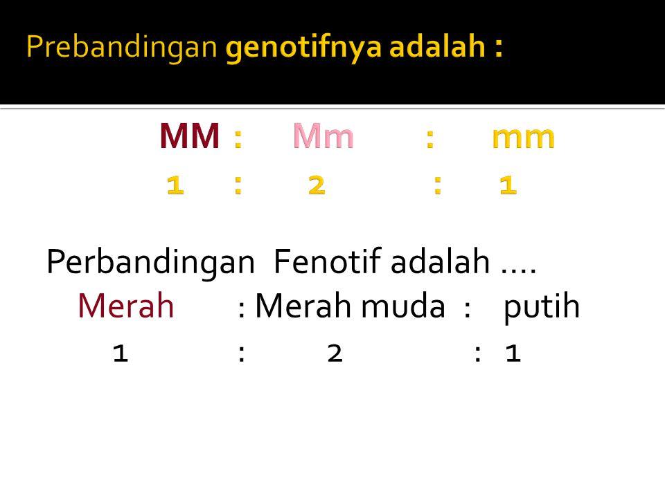 Prebandingan genotifnya adalah : MM : Mm : mm 1 : 2 : 1