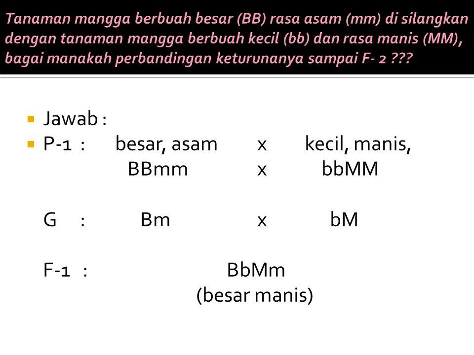 P-1 : besar, asam x kecil, manis, BBmm x bbMM G : Bm x bM F-1 : BbMm
