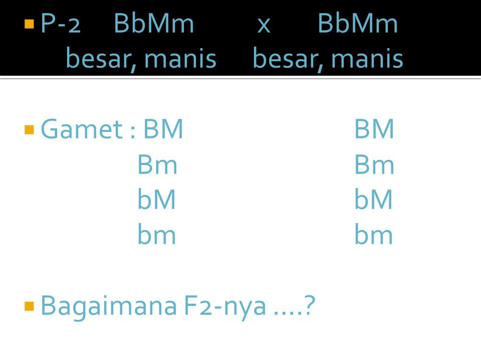 P-2 BbMm x BbMm besar, manis besar, manis