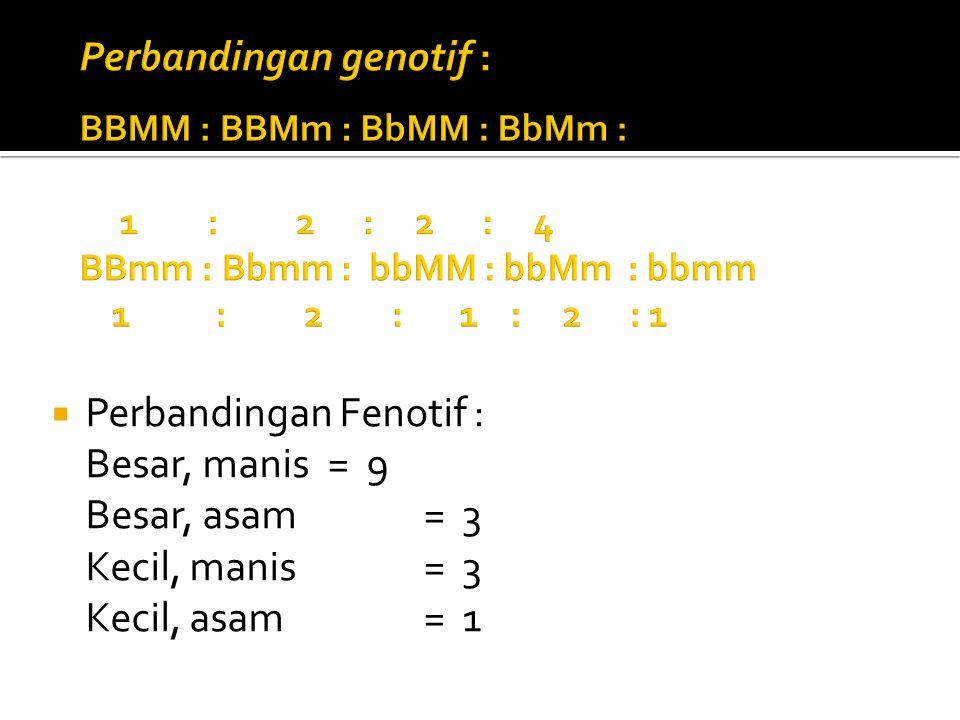Perbandingan genotif : BBMM : BBMm : BbMM : BbMm : 1. :. 2 : 2 : 4