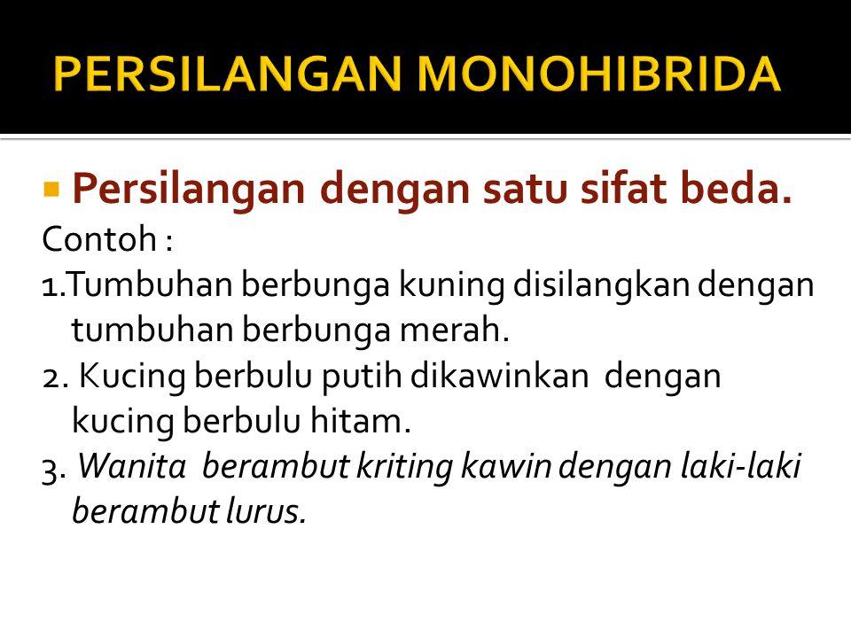 PERSILANGAN MONOHIBRIDA