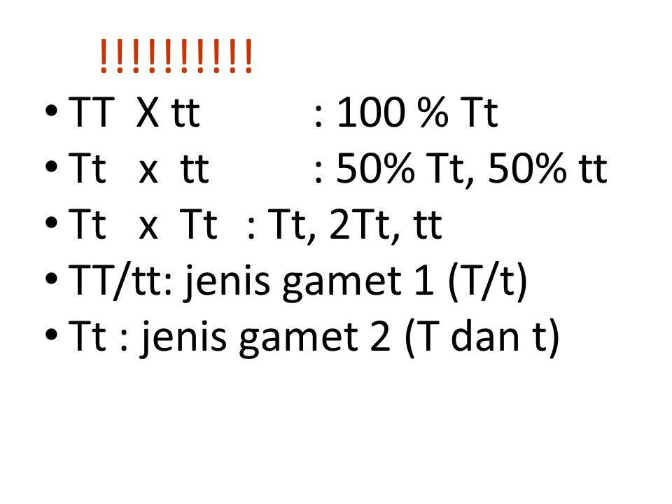 !!!!!!!!!! TT X tt : 100 % Tt Tt x tt : 50% Tt, 50% tt