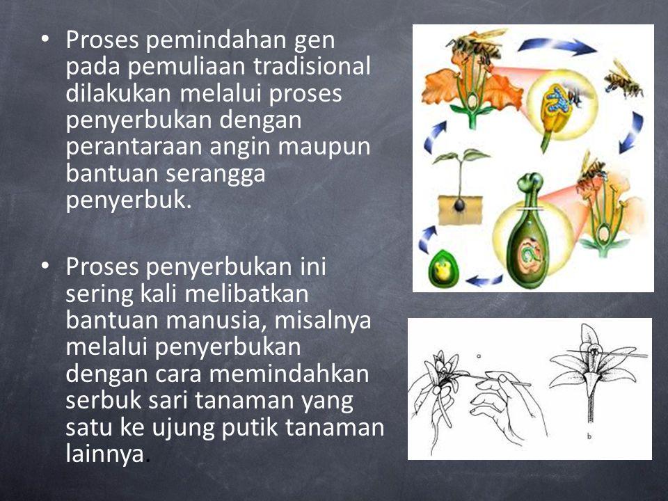 Proses pemindahan gen pada pemuliaan tradisional dilakukan melalui proses penyerbukan dengan perantaraan angin maupun bantuan serangga penyerbuk.