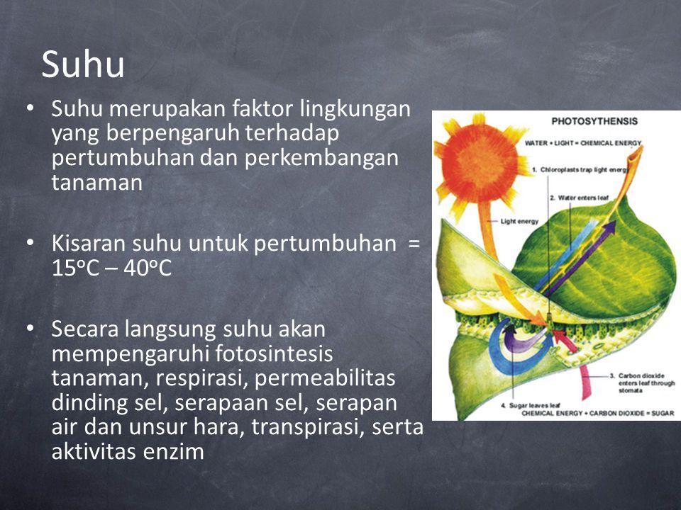 Suhu Suhu merupakan faktor lingkungan yang berpengaruh terhadap pertumbuhan dan perkembangan tanaman.