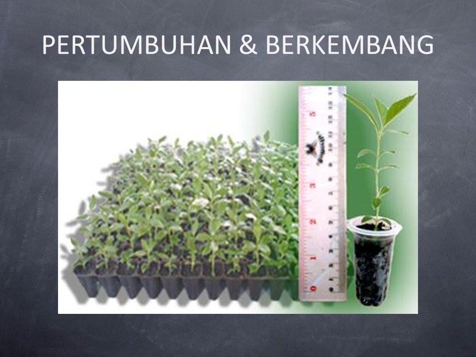 PERTUMBUHAN & BERKEMBANG