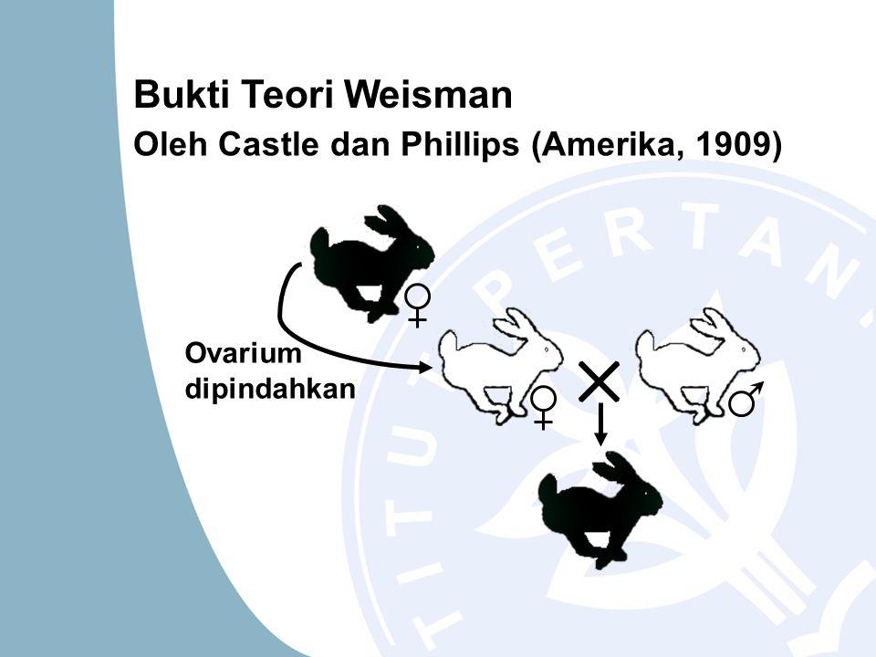 Bukti Teori Weisman Oleh Castle dan Phillips (Amerika, 1909)