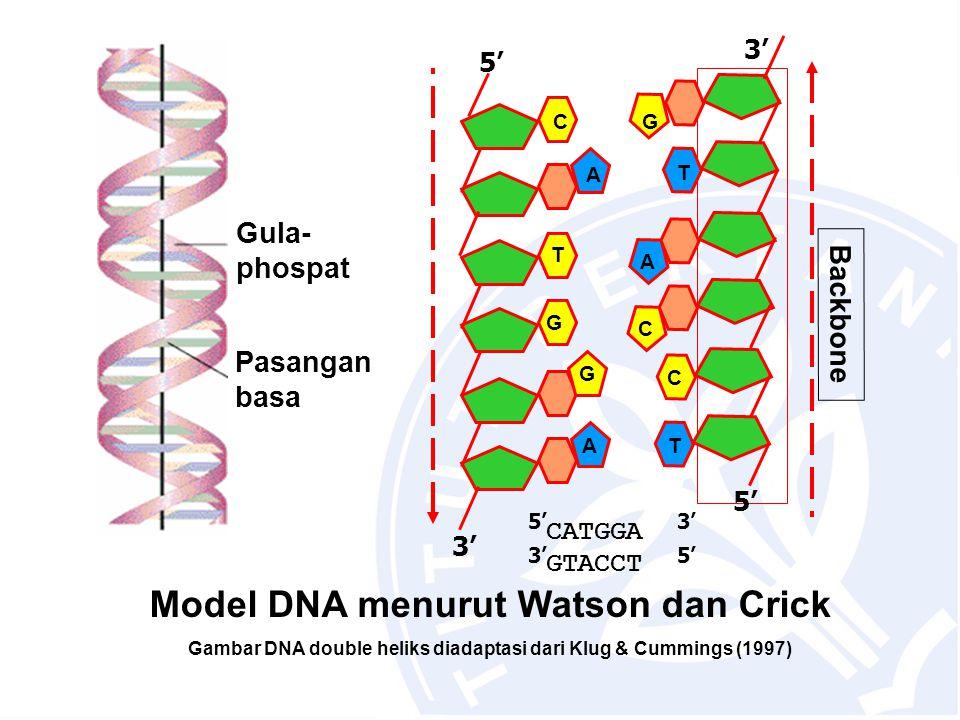 Model DNA menurut Watson dan Crick