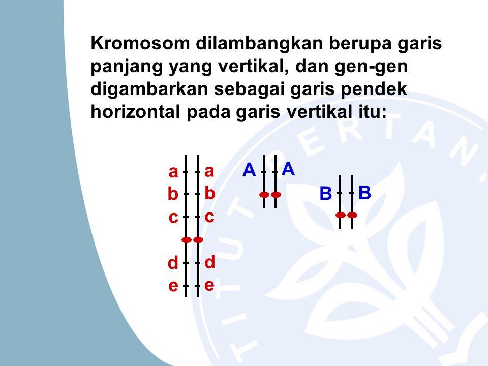 Kromosom dilambangkan berupa garis panjang yang vertikal, dan gen-gen digambarkan sebagai garis pendek horizontal pada garis vertikal itu: