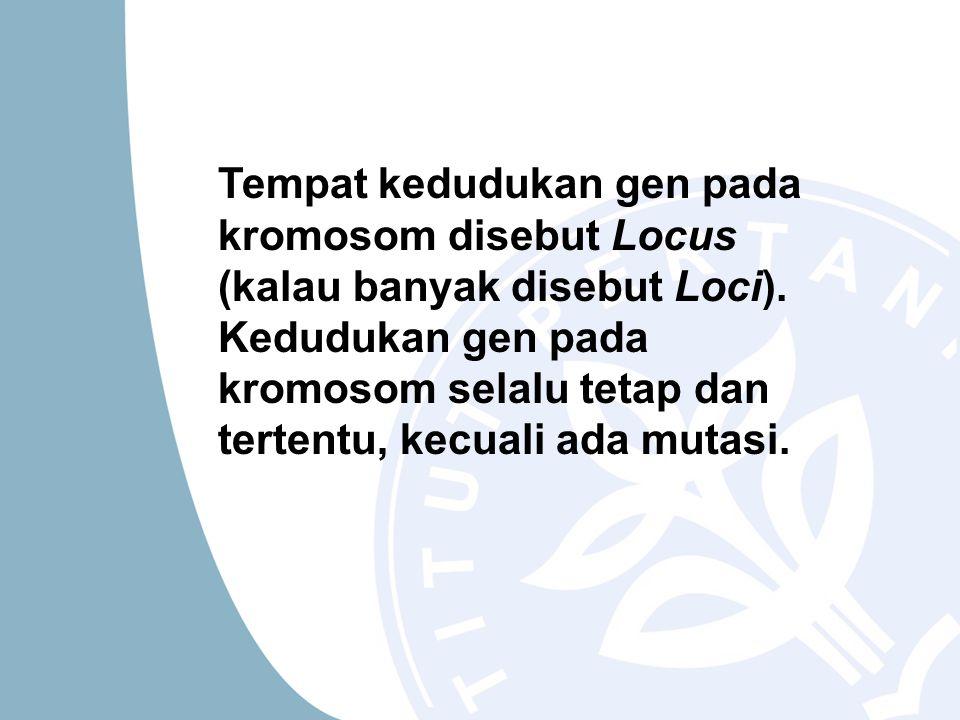 Tempat kedudukan gen pada kromosom disebut Locus (kalau banyak disebut Loci).