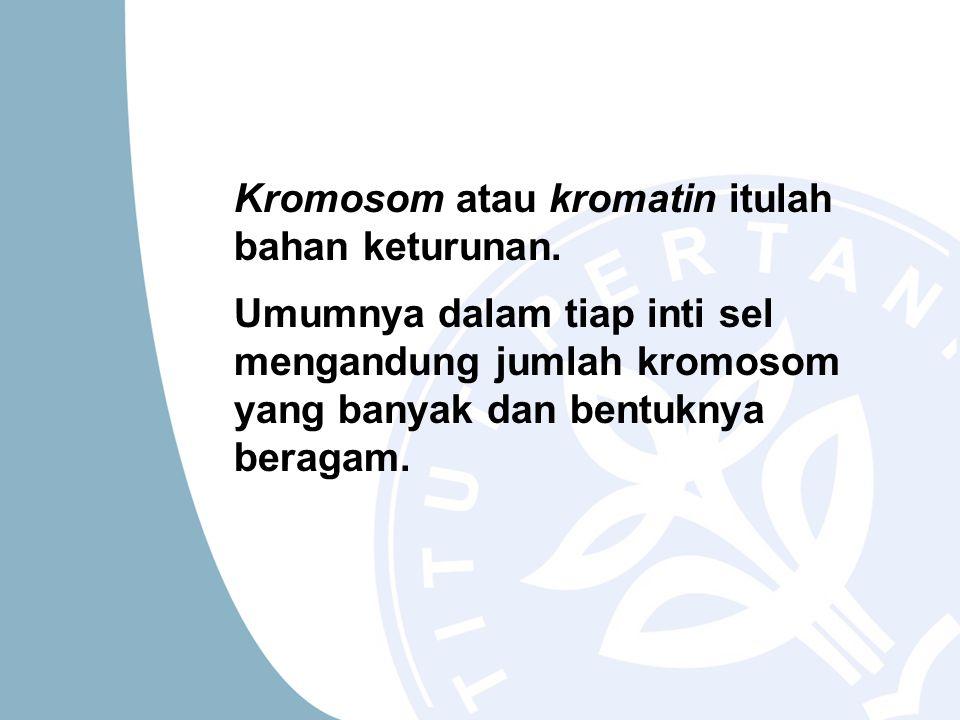 Kromosom atau kromatin itulah bahan keturunan.