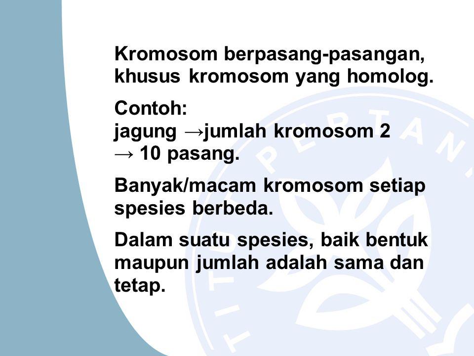 Kromosom berpasang-pasangan, khusus kromosom yang homolog.