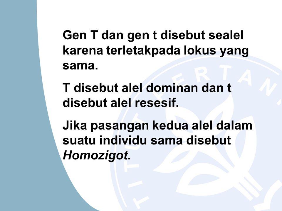 Gen T dan gen t disebut sealel karena terletakpada lokus yang sama.