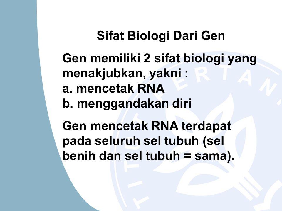 Sifat Biologi Dari Gen Gen memiliki 2 sifat biologi yang menakjubkan, yakni : a. mencetak RNA b. menggandakan diri.