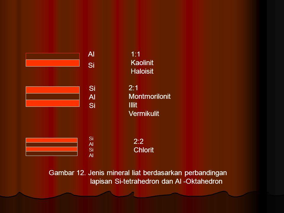 Gambar 12. Jenis mineral liat berdasarkan perbandingan