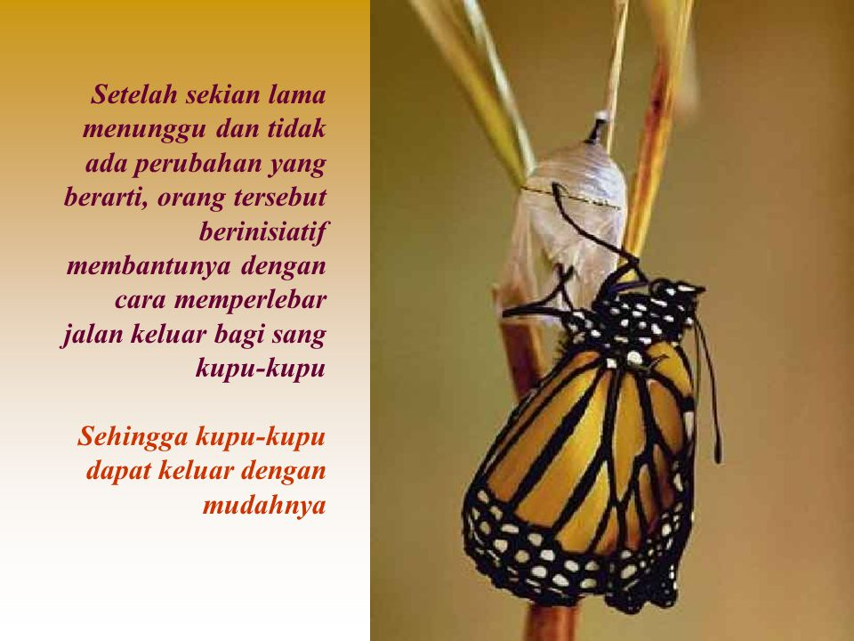 Setelah sekian lama menunggu dan tidak ada perubahan yang berarti, orang tersebut berinisiatif membantunya dengan cara memperlebar jalan keluar bagi sang kupu-kupu