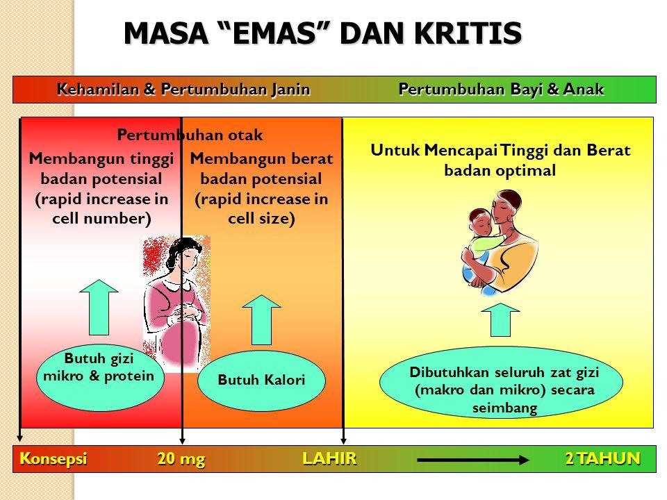 MASA EMAS DAN KRITIS Kehamilan & Pertumbuhan Janin Pertumbuhan Bayi & Anak.