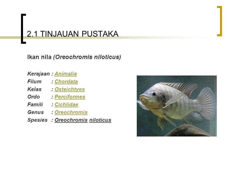 Ikan nila (Oreochromis niloticus)